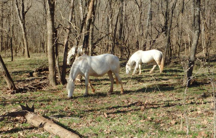 Wildhorse 7