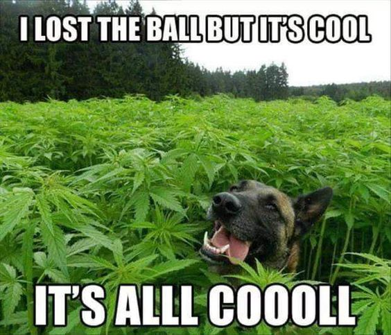 It's all cool.